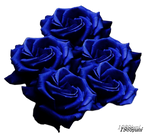 Stock photo blaue Rosen