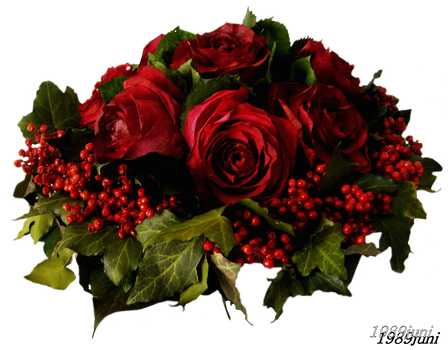 Stock photo rote Rosen