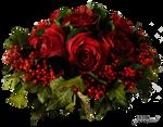 Stock photo rote Rosen