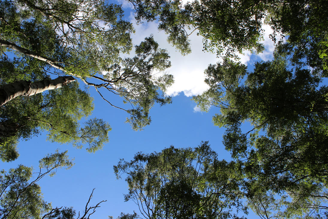 up through the canopy by adamphillip