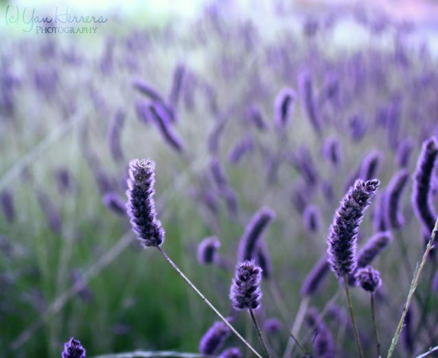 Purple Fantasy by BerryBlu