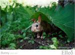 Bunny Doll Bjd 05