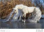 Horse bjd doll 03