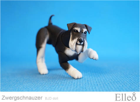 Zwergschnauzer Bjd Doll 03