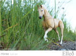 Horse bjd doll 06