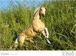 Horse bjd doll 12