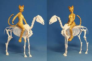 Horse skeleton 09