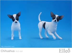 Chihuahua Bjd Doll 07