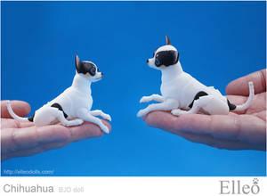 Chihuahua Bjd Doll 01
