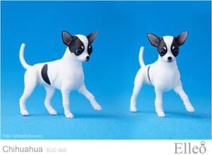 Chihuahua Bjd Doll 03