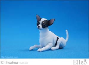 Chihuahua Bjd Doll 04
