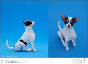 Chihuahua Bjd Doll 06