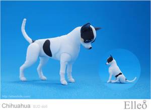 Chihuahua Bjd Doll 08