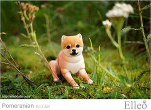 Pomeranian bjd doll 02