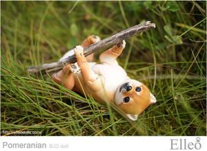 Pomeranian bjd doll 04