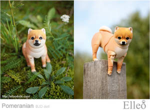 Pomeranian bjd doll 05