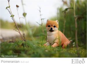 Pomeranian bjd doll 08