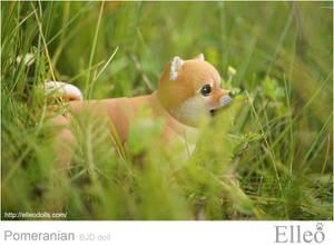 Pomeranian bjd doll 09