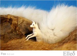 White fox 02
