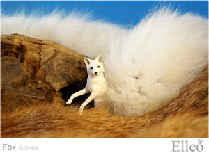 White fox 03