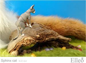 Sphinx bjd cat doll 03