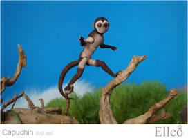 Capuchin bjd doll 01