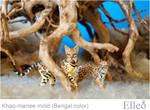 Bengal bjd cat 0333