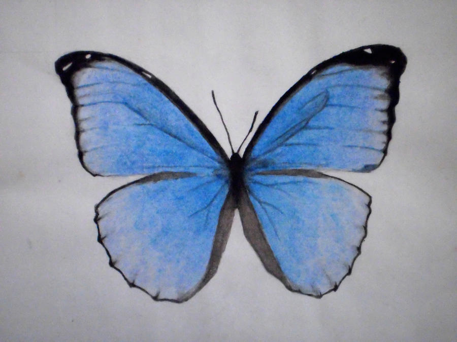 Butterfly drawings on million butterflies deviantart for How to make a butterfly drawing