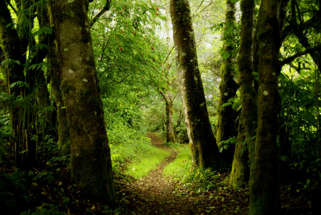 Forest Path by fadingechoes101