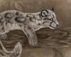 Clouded Leopard Cub by daisy7