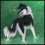 Green-Border Collie
