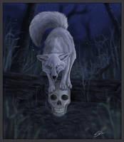 Fox lore by daisy7