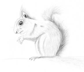 Realistic Squirrel