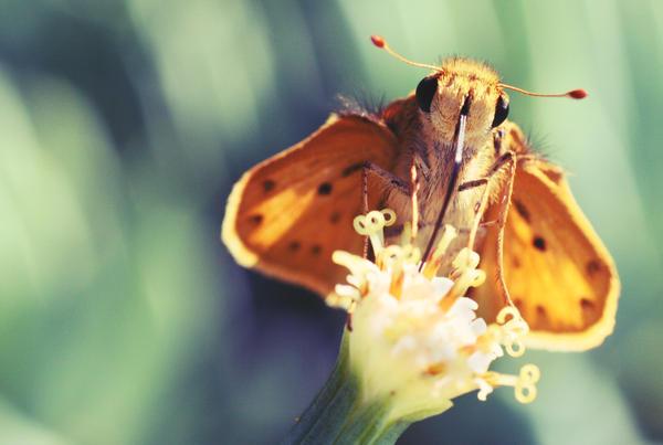 mothfly by ssecret