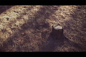 No more walks in the wood II