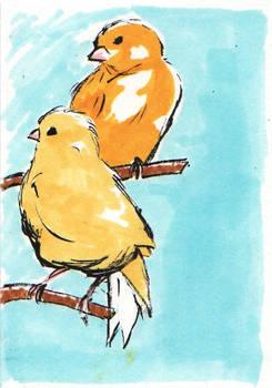 Canaries ATC