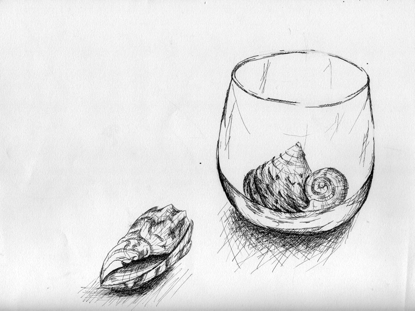 Seashell Drawing by experimettle