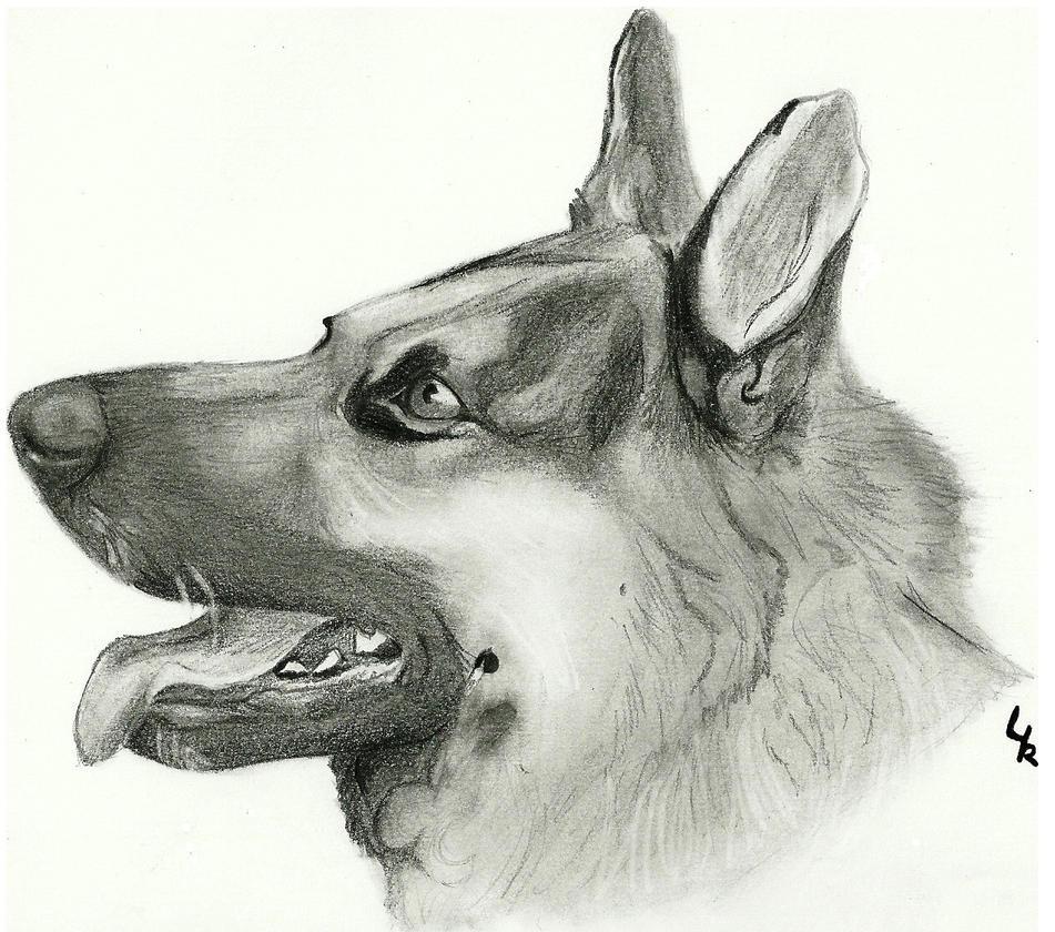 Realistic german shepherd drawing