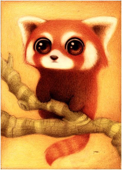 Panda rojo. by faboarts