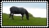 Horse Stamp - First Attempt! by Hazelnut-Eyes
