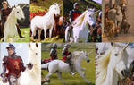 Creatures of Narnia Tribute: Unicorns