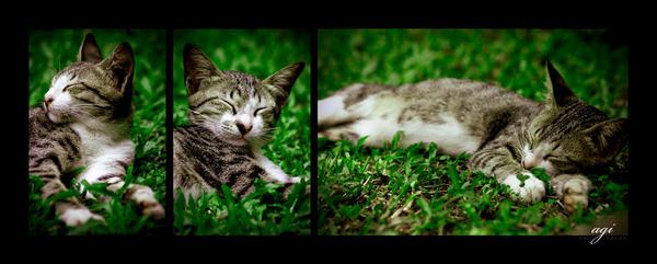 SLEEPY CAT by agie