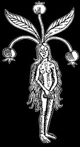 mandrakepcc's Profile Picture