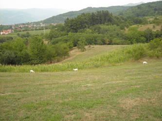 Meadow in Serbia by SuperStormtrooper501