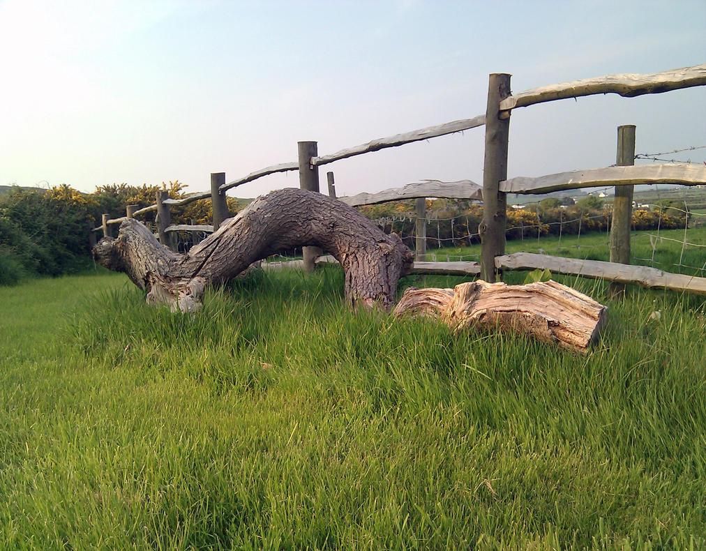 Fallen Tree Branch stock by jonboy56 on DeviantArt