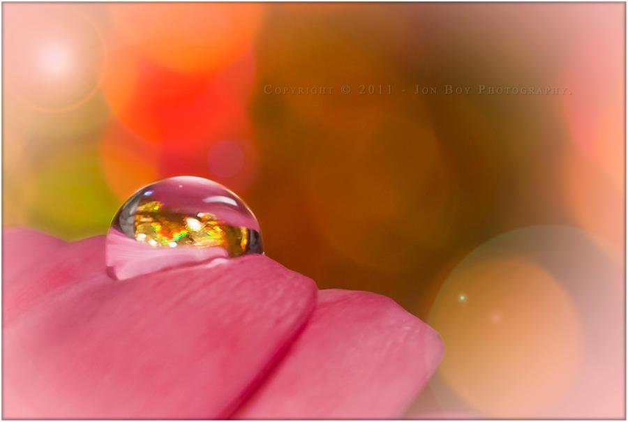 Petal Drop 04 by jonboy56