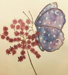 starry wings