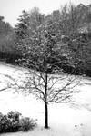 Snow + Ice 1