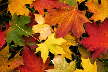 Autumn Leaves by JimmyJam75