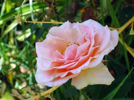Flower by DivineError